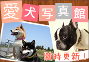 愛犬写真館